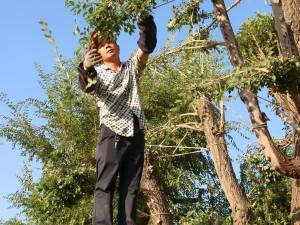 天润基地造型树作业