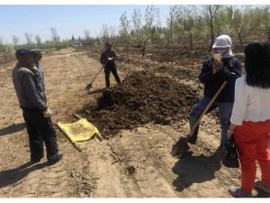 沙棘丰产实验林日常生产作业