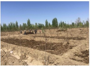 沙棘种质资源库日常生产作业