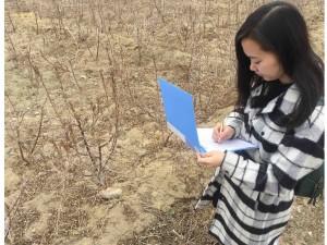 榆树物候观测 (2)