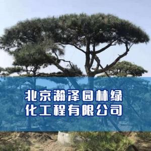 北京瀚泽园林绿化工程有限公司