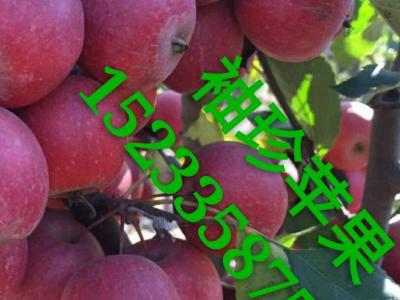 果树苗木 (19)