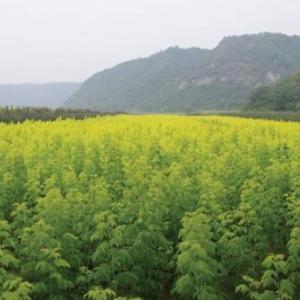 中航盛昌生态园林有限公司