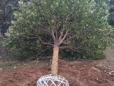 优秀苗木展示