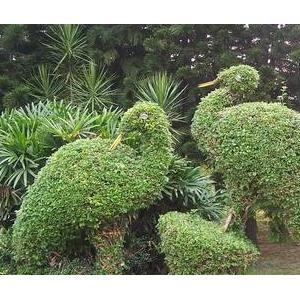 动植物造型