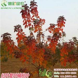 江西宜黄县绿农农业发展有限公司