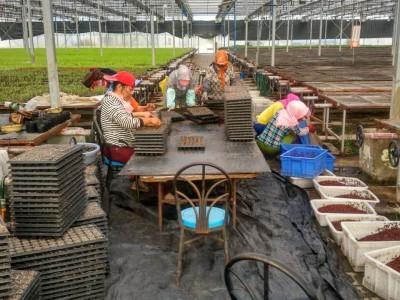 玖运景致1号温室育苗生产作业 (10)